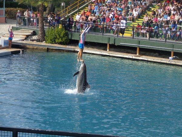Seaquarium flipper