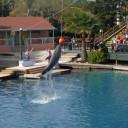 Visiter le Seaquarium à Miami